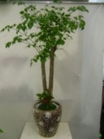 행복나무2