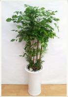 녹보수 대박나무