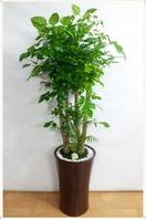 대박나무2