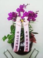 만천홍 2